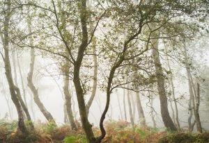 Jack Flats Autumn, , Peak District