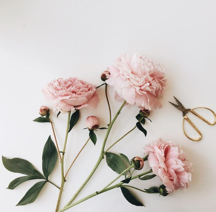 Pinterest Indiaphelanboyd Flower Aesthetic Beautiful Blooms Pink Flowers