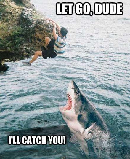 приколы про акул фото