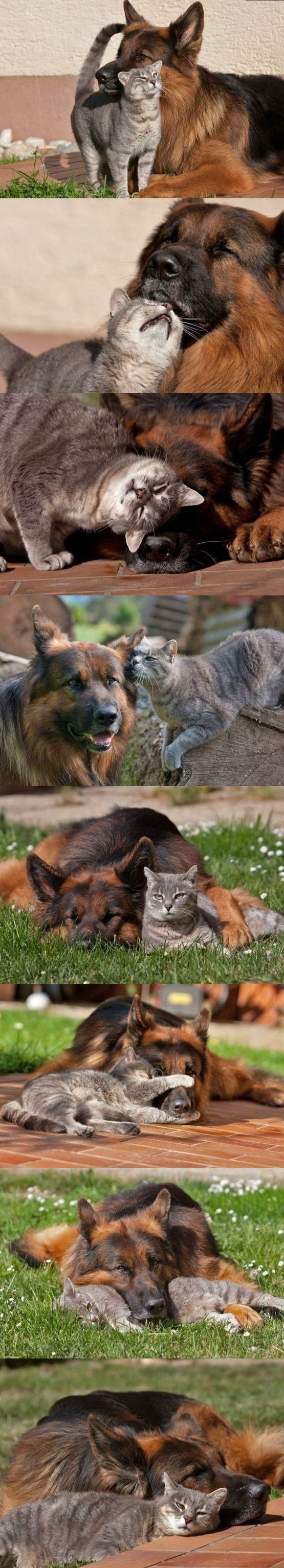 A cat and dog that play together, sleep together and cuddle each other.
