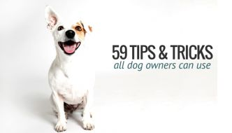 59 simple dog care tips