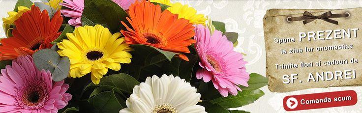 Flori pentru Andreea