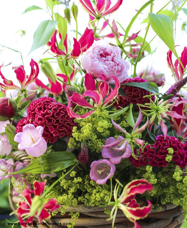 Bouquet of Gloriosa, Celosia, Paeonia, Alchemilla, Campanula and Lysimachia - Pink inspiration pictures for florists