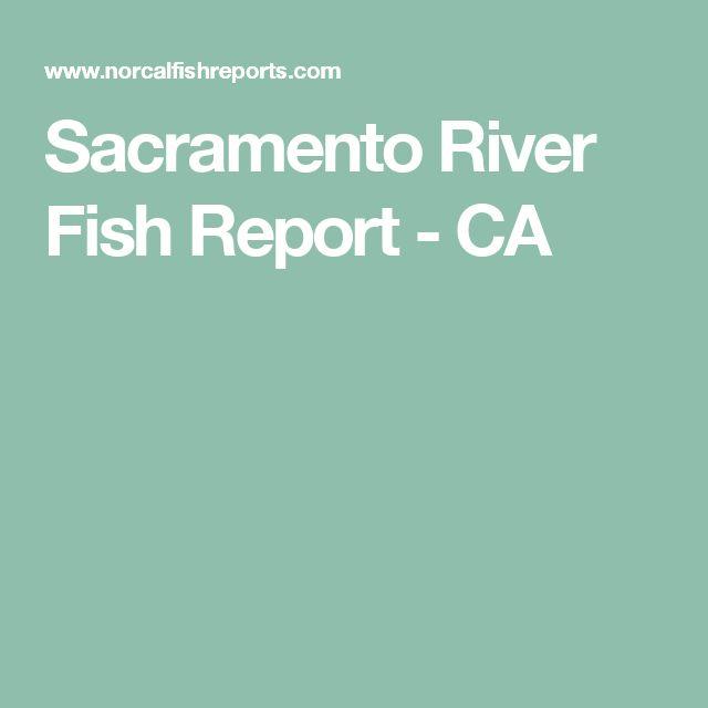 Sacramento River Fish Report - CA