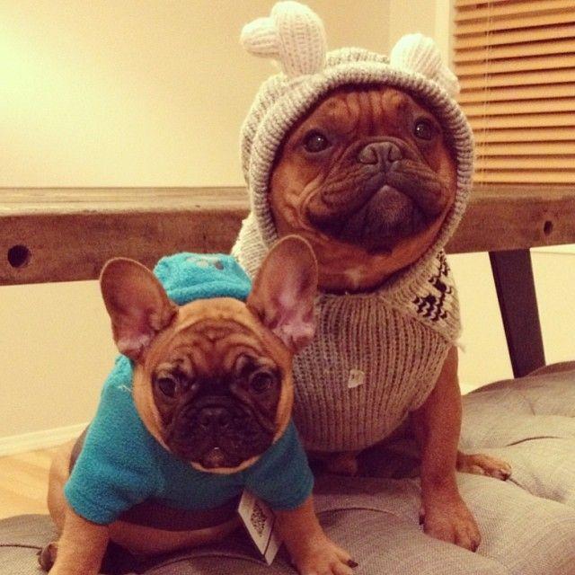 Best instagram ever #puppy #dog