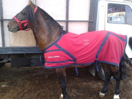 cobertor caballo