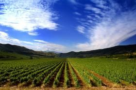 Agricultural Guarantee Fund Scheme &  African #Green Revolution Forum. Co-sponsors include the Alliance for a Green Revolution in Africa (AGRA), #StandardBank Group and Yara International ASA. #Agriculture