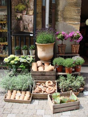 Herbs grow wild under foot in Provence and create a wonderful aroma in the air.