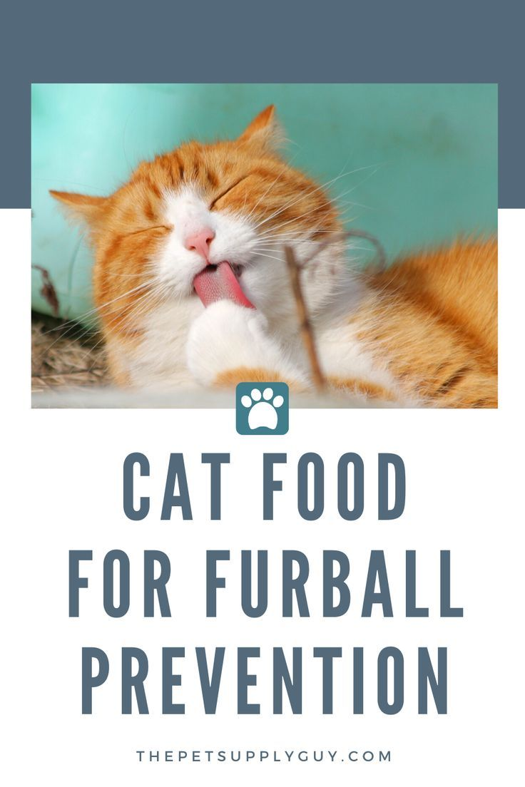 Best Cat Food To Prevent Hairballs The Pet Supply Guy In 2020 Best Cat Food Cat Food Cool Cats