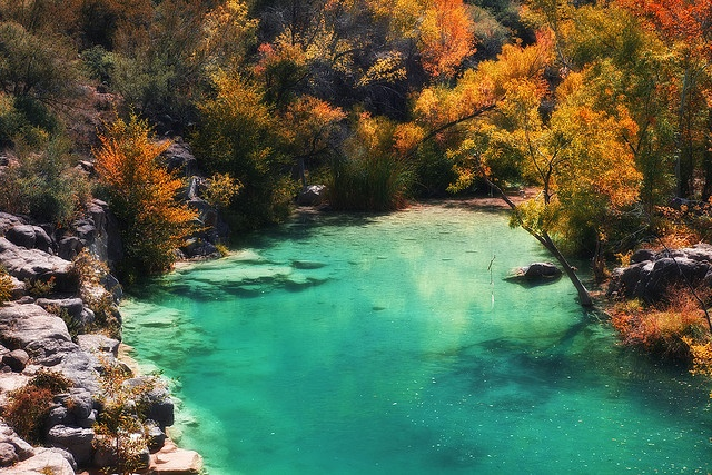 20 best Arizona! images on Pinterest | Fossil creek, Arizona and Fossils