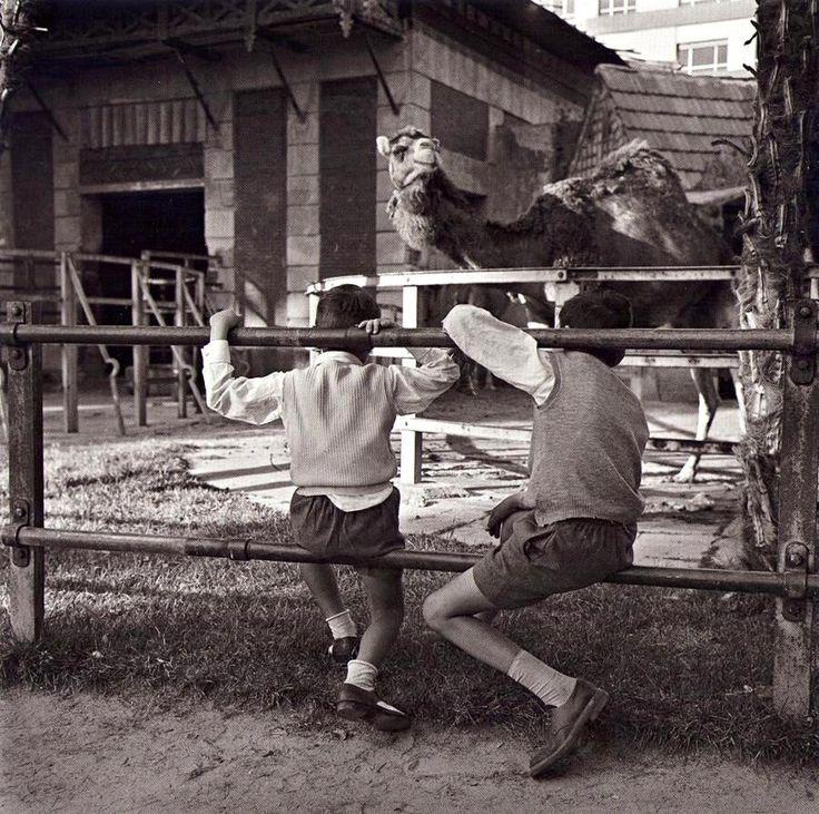 Casa de las fieras.1958 Parque de El Retiro, Madrid