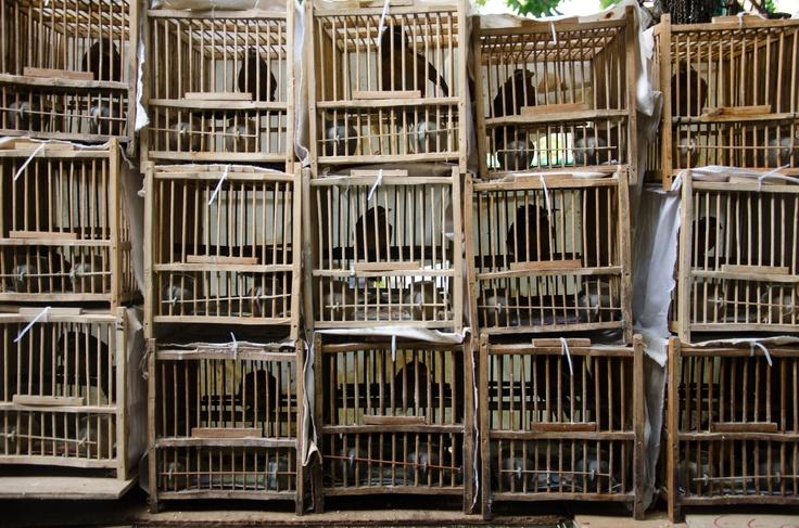 Chinese Jail  Hong Kong 2012  @xdumont