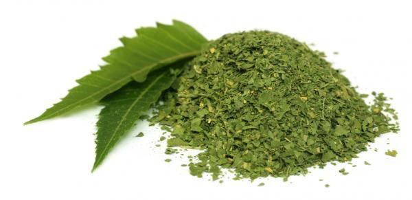 Cómo usar el aceite de Neem. El Neem ha sido declarado el árbol del siglo XXI por las Naciones Unidas y es que sus propiedades y sus beneficios para la piel son inacabables. La azadirachta índica, su nombre científico, es sin dud...