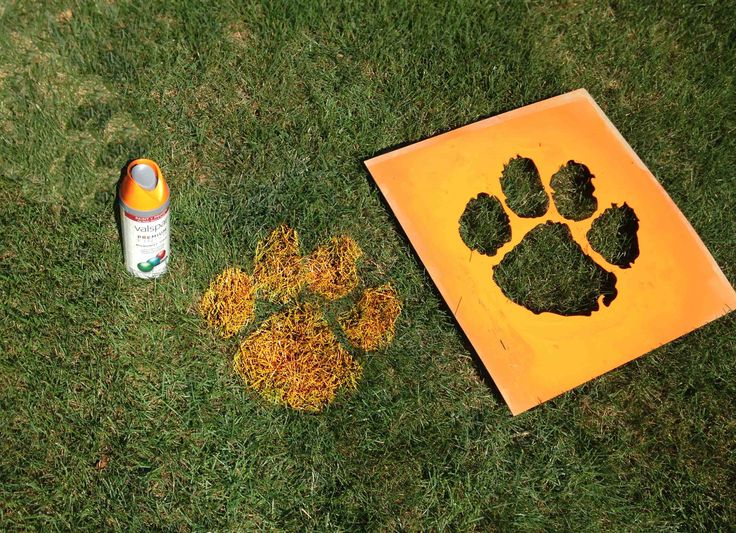 Clemson Tiger Lawn Painting // South Carolina // Stencil Designs // DIY Projects // Wall Stencils // Letter Stencils // Custom Stencils