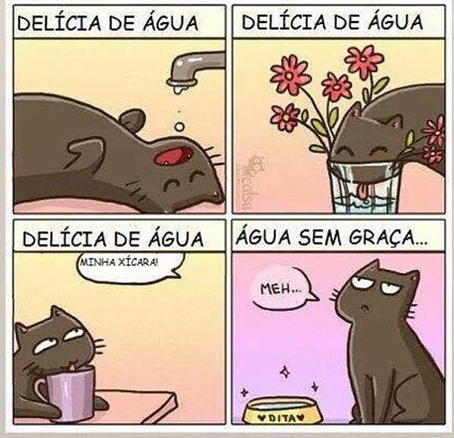 BEM ASSIM! ❤️❤️ #filhode4patas  #gato  #petmeupet  #amoanimais  #amogato  #gatofolgado
