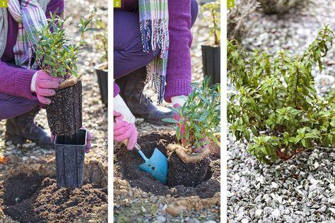 4 astuces pour un beau jardin sans entretien : Planter dans le gravier