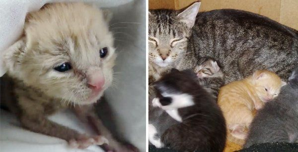 Kitten Rescued Alone On Rainy Day Can T Stop Purring When He Finds A Family He In 2020 Kitten Rescue Animal Rescue Stories Cat Rescue Stories