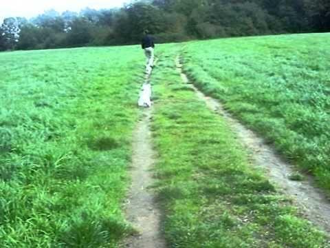 De honden aan het rennen.