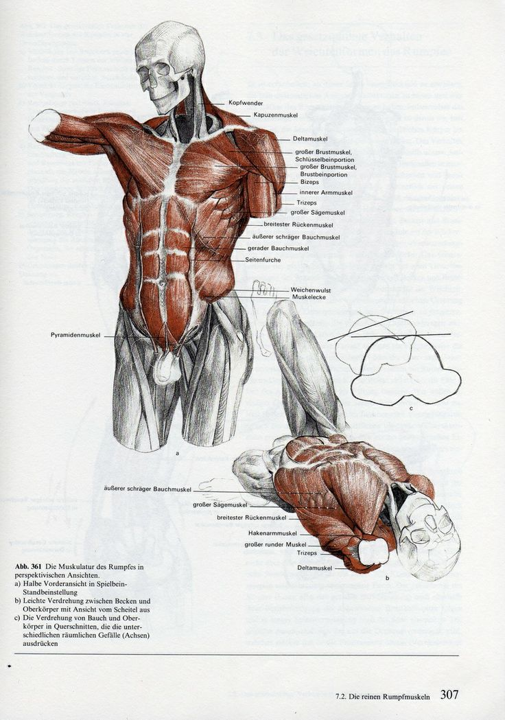 16 best Gottfried Bammes images on Pinterest | Anatomy reference ...