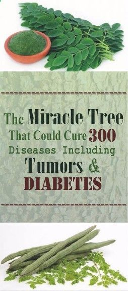 Find out about  The Miracle Tree That Could Cure 300 Diseases Including Tumors And Diabetes - Read & Repin