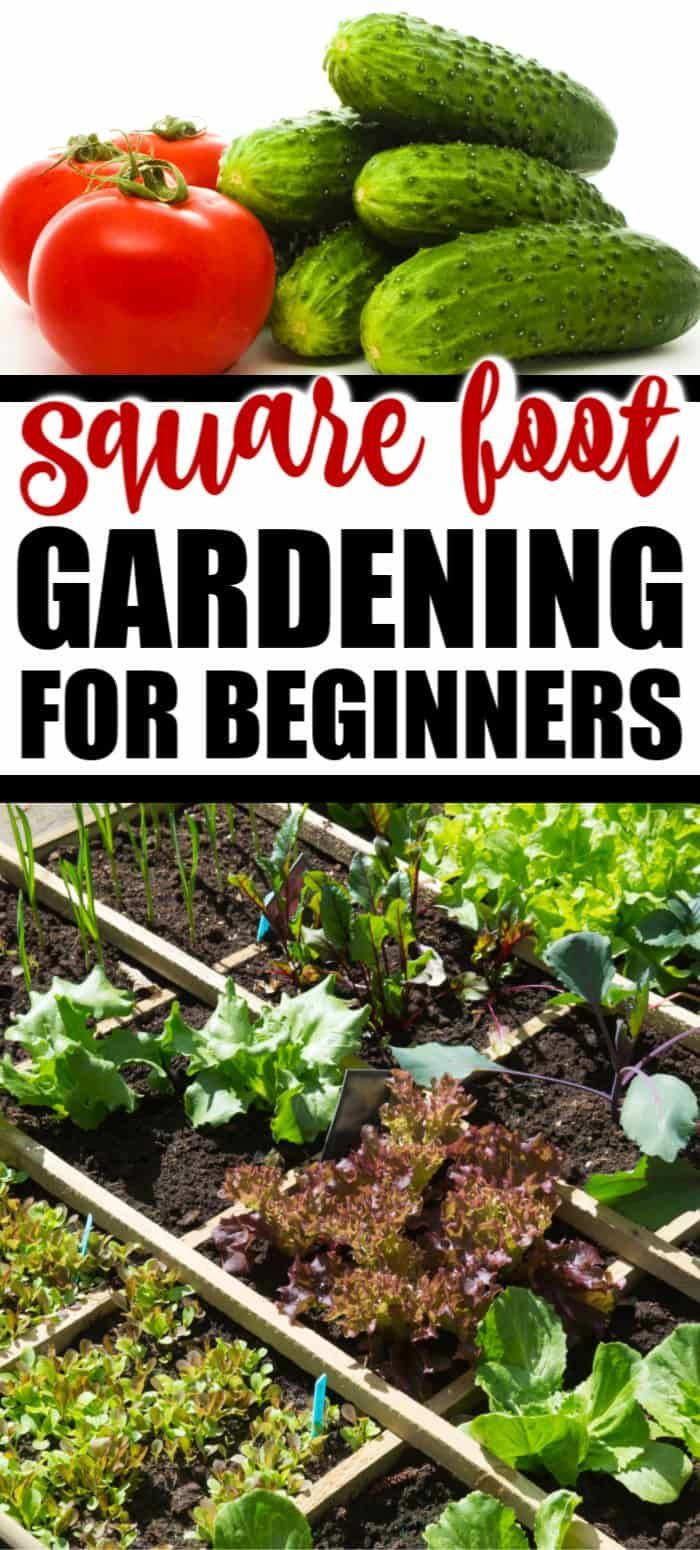 Easy Backyard Landscaping Ideas For Beginners In Square: SQUARE FOOT GARDENING FOR BEGINNERS