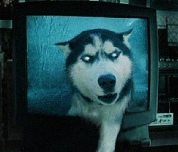 Too muche Pets Ads
