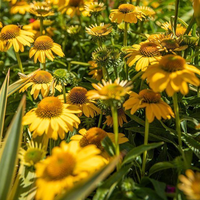Pin On Summer Planting