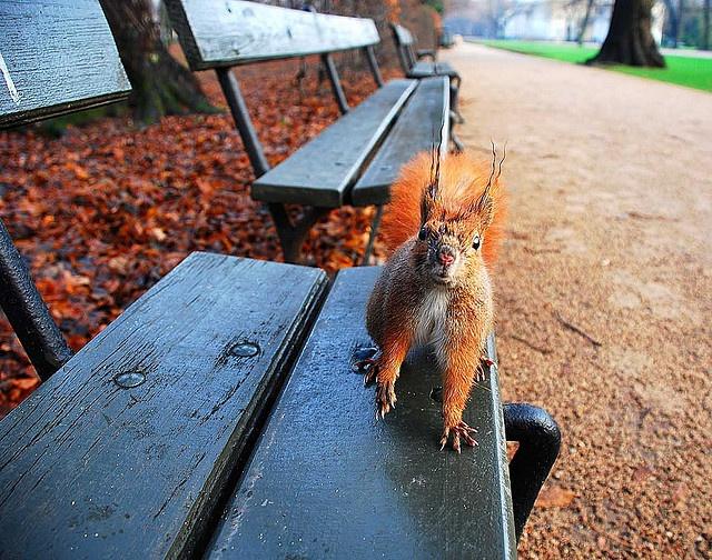 Squirrel, Warsaw by Akallisti, via Flickr