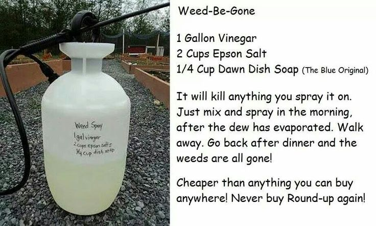 Home made weed-be-gone. And safe for use in yards with pets and kids.