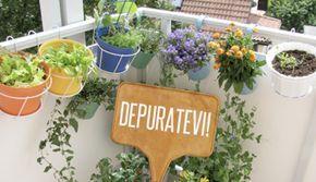 8 erbe depurative che potete coltivare sul balcone | Giardinieri in affitto