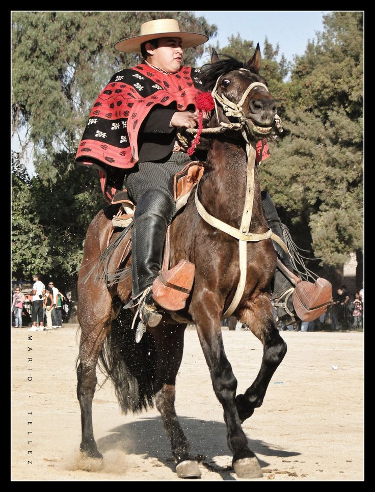 """What does it mean """"Huaso"""": A typical Chilean cowboy or country person.   www.natalislang.com"""