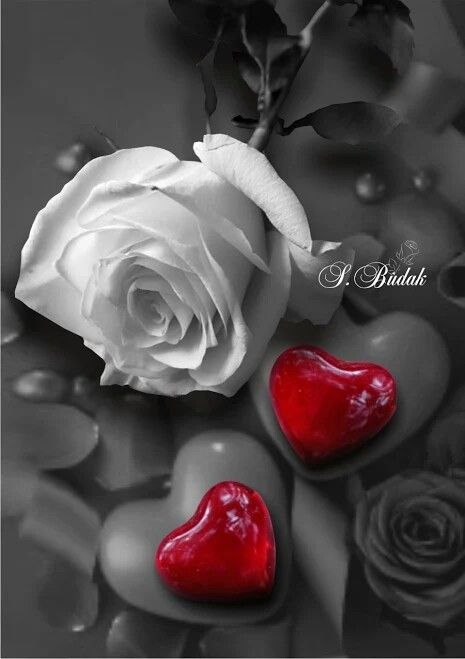 Sabri Budak - Touch of color | Beautiful love pictures ...