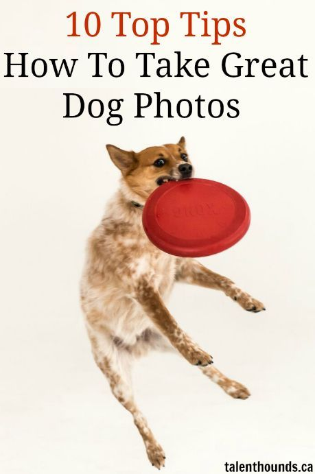 Tips For Taking The Best Photos Of Your Dogs! http://talenthounds.ca/featured-stories/how-to-take-a-photo-of-your-dog/