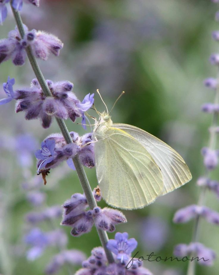 10 Geeky Butterfly facts for kids.