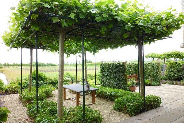 constructie voor terras met dakbomen