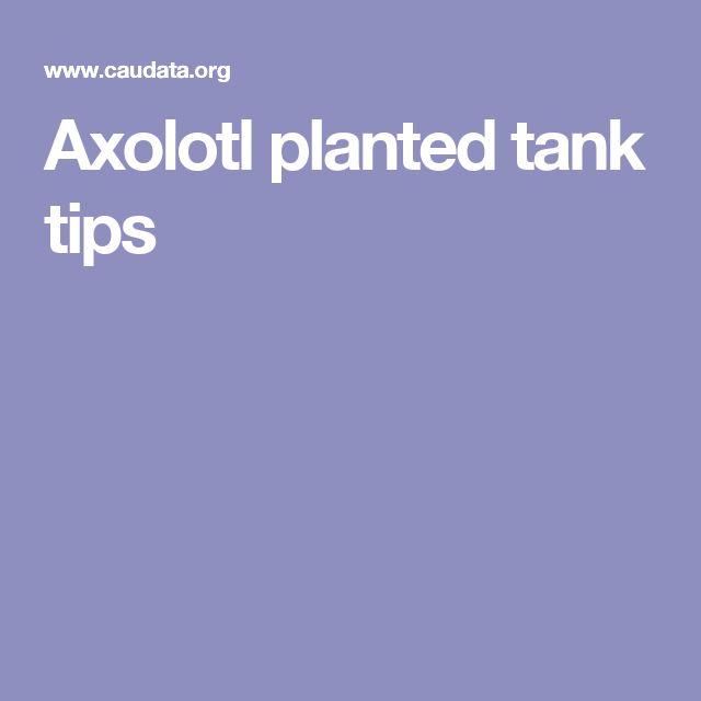 Axolotl planted tank tips