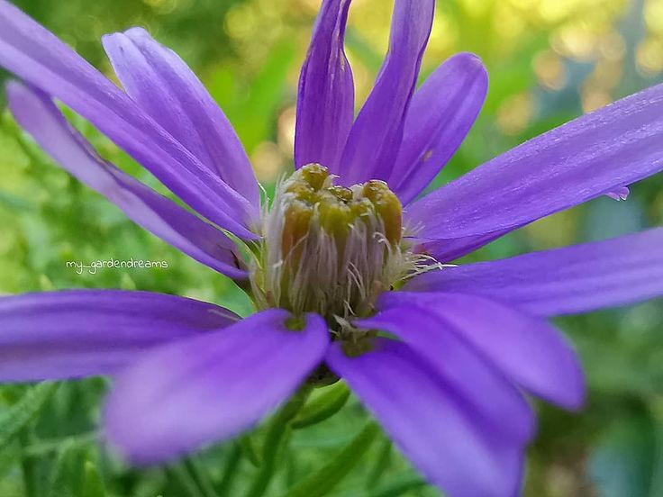 Zauberhaften Wochenstart euch allen! Bei dem Wetter lässt sich der Montag doch noch gut aushalten  . . #fotografie_ist_unser_hobby #blooming_macro #m…