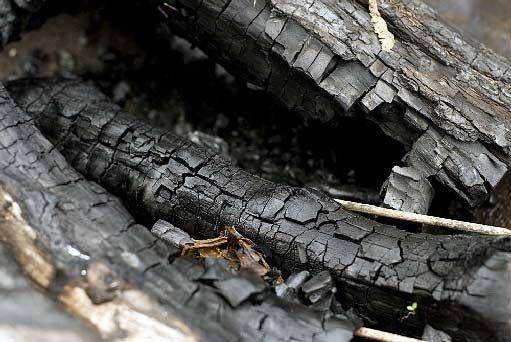 dřevěný popel - hnojivo