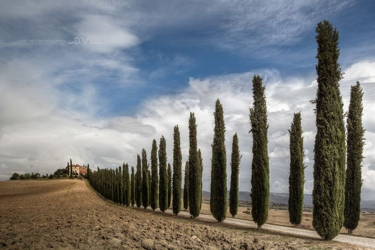 Tuscany cypresses line by Daniel Metz on 500px