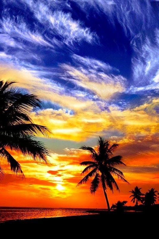 Tropica: Cocktail hour
