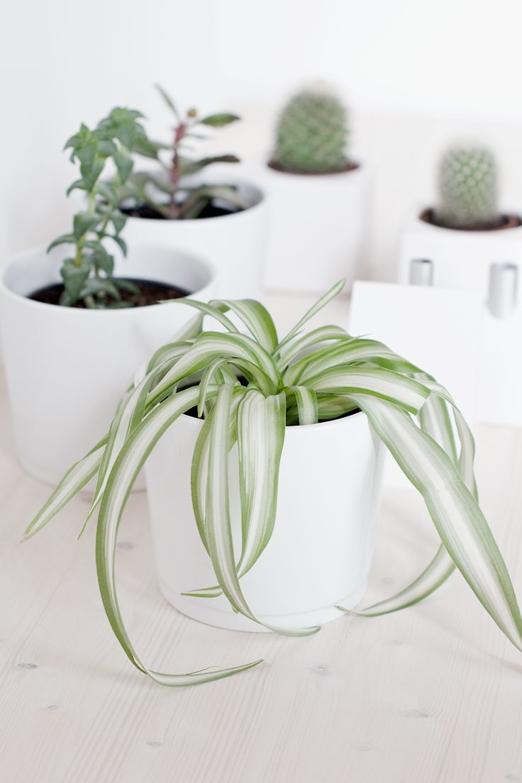 Urban Jungle Bloggers: 1 Plant – 3 Stylings by @wiesoeigentlichnichtblog.blogspot.de