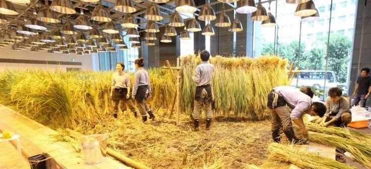 Miejskie farmy to najnowszy trend w planowaniu przestrzennym wielkich aglomeracji. Podczas gdy świat dopiero snuje fantazje na ten temat, tokijskie biuro firmy Pasona od lat produkuje własną żywność. Inne korporacje wręcz zielenieją z zazdrości! http://exumag.com/pasona-urban-farm/