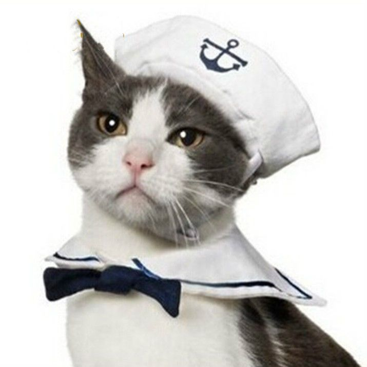 Best Dress Up Kitty Images On Pinterest Adorable Animals - Cat dressed in tiny sailors outfit becomes captain of russian cruise ship