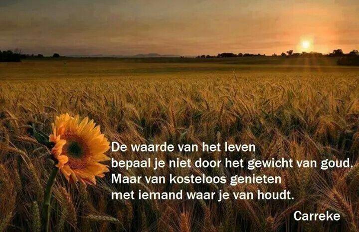 De waarde van het leven ...