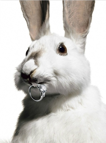 Harry Winston diamond ring by photographer Laziz Hamani  #Easter #bunny #rabbit