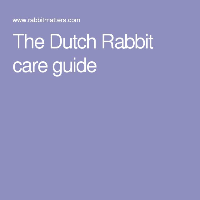 The Dutch Rabbit care guide