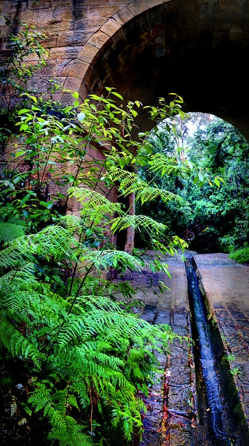 Ferns by evangelique, via Flickr