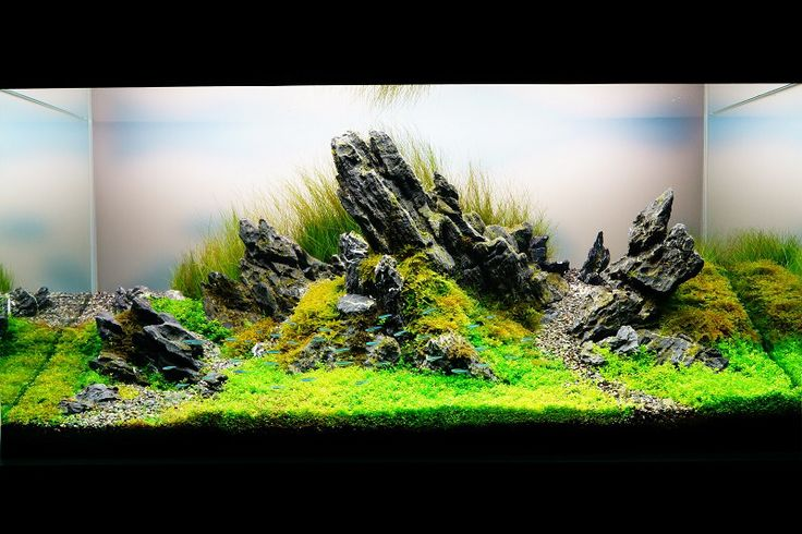 Wicked Aqua Scape Fish Tank Aquarium Landscape