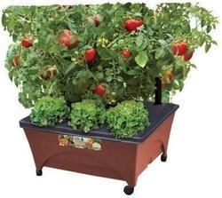 City Pickers Raised Garden Bed Kit for $20  pickup at Home Depot #LavaHot http://www.lavahotdeals.com/us/cheap/city-pickers-raised-garden-bed-kit-20-pickup/187973?utm_source=pinterest&utm_medium=rss&utm_campaign=at_lavahotdealsus