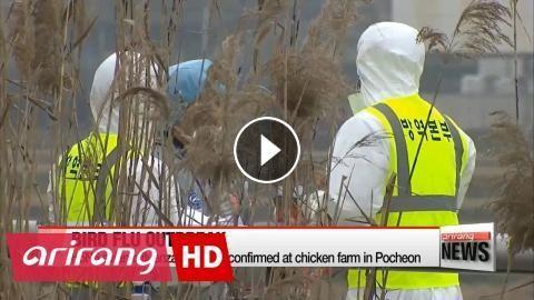 H5N6 avian influenza outbreak confirmed at chicken farm in Pocheon: AI 수도권 확산…최대 닭산지 포천서도 H5N6형 확진 A highly pathogenic strain of avian…